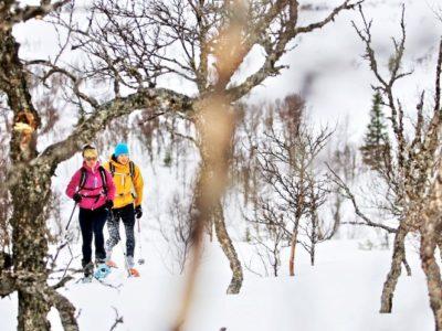 Begeleide sneeuwschoen hike Stockholm