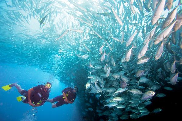 PADI Advanced Open Water Gran Canaria
