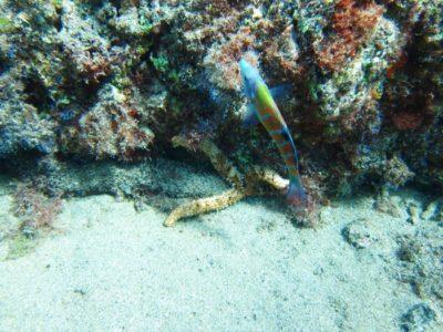 PADI Scuba Diver Lanzarote