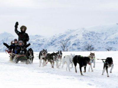 Halve dag Hondensledetocht Tromsø Noorwegen