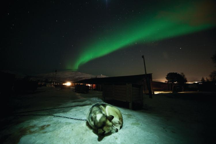 2 dagen Hondensledetocht Tromsø Noorwegen