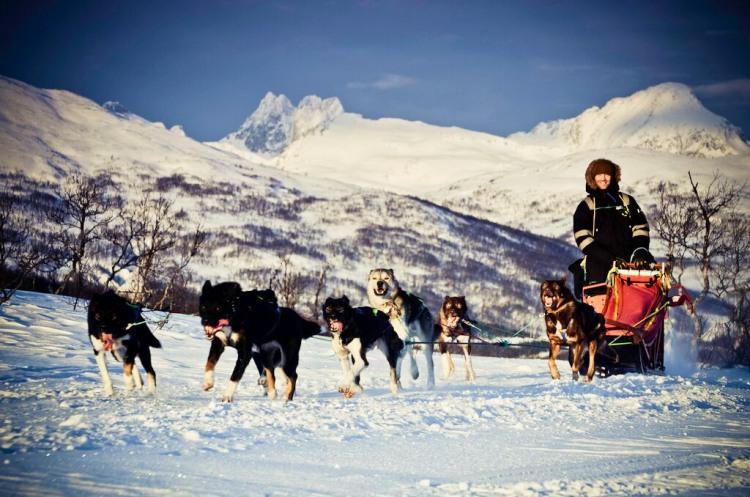 1 dag Hondensledetocht Tromsø Noorwegen