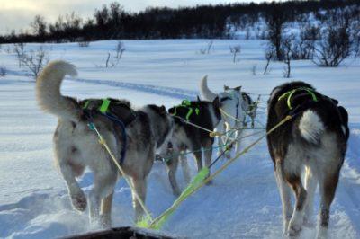 Tweedaagse hondesledentocht Noorwegen(2)