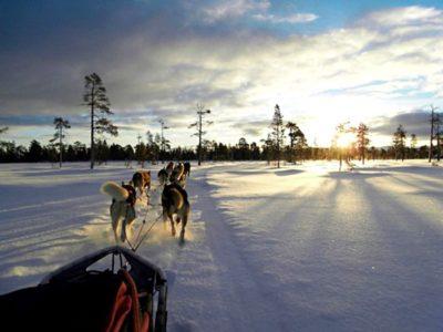 Hondensledetocht Sörsjön Dalarna centraal Zweden