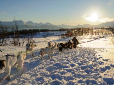 5 dagen Hondensledetocht Tromsø Noorwegen