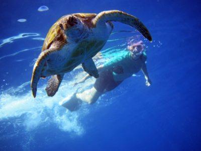 3 uur kajakken met dolfijnen en snorkelen met schildpadden Los Cristianos Tenerife