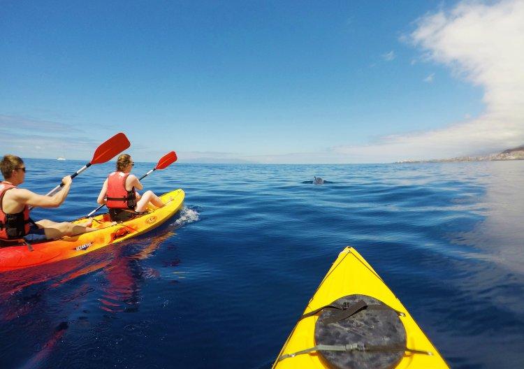 3 uur kajakken met dolfijnen Los Cristianos Tenerife