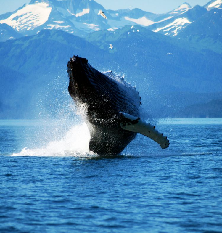 walvis spotten boottocht Tromso Noorwegen