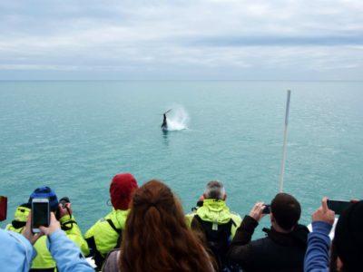2 uur bootexcursie Express walvis spotten Reykjavik IJsland