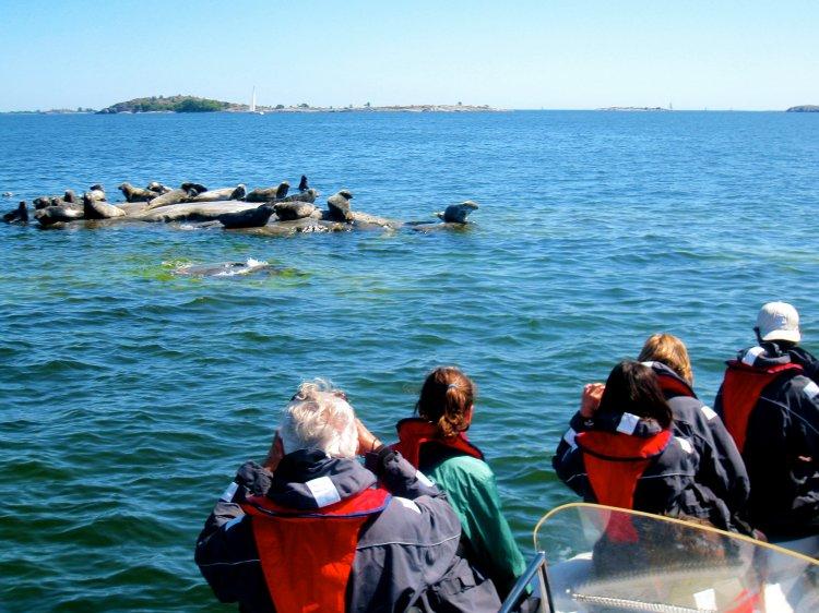 3 uur zeehonden safari RIB speedboottocht Stockholm Zweden