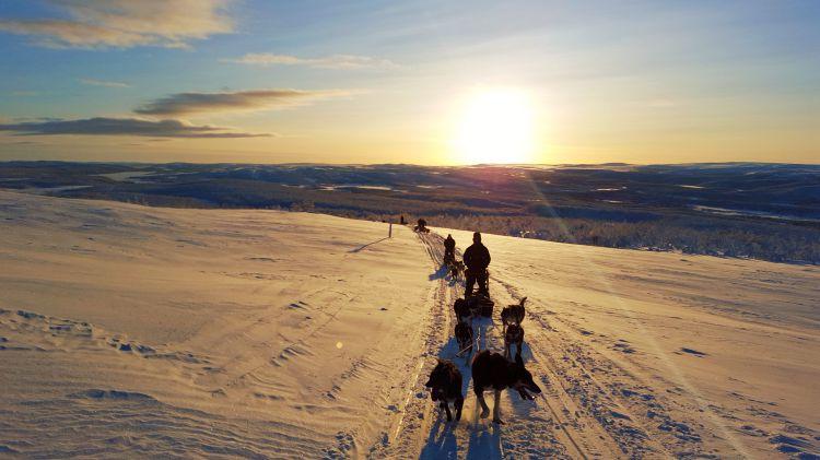 1,5 dag Noorderlicht en Hondensledetocht Alta Noorwegen