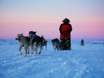 2,5 uur hondensledetocht langs de Alta rivier Noorwegen