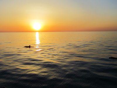 3 uur Catamaran boottocht zonsopgang en dolfijn spotten Mallorca