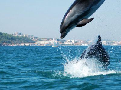 1 dag Jeep Safari en dolfijnen spotten Sintra Lissabon Portugal